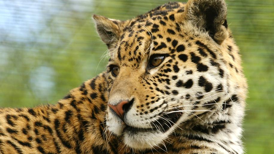 Paradise Wildlife Park leopard
