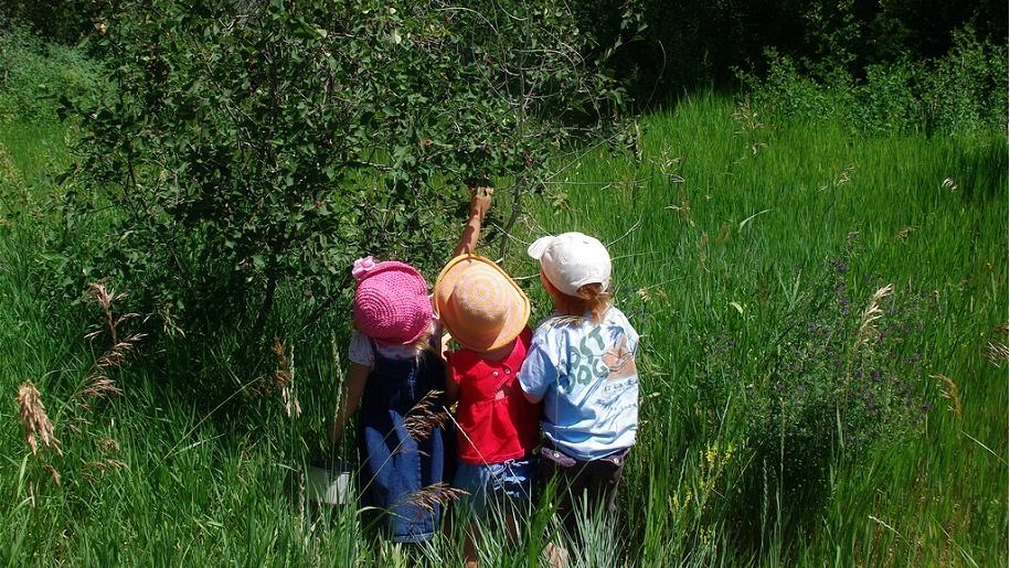 kids berry picking