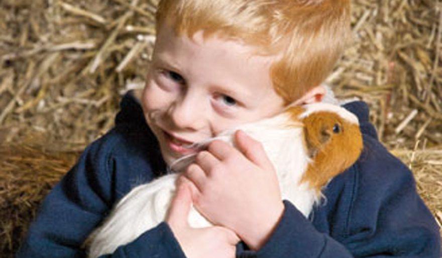 Rover Farm child with guinea pig