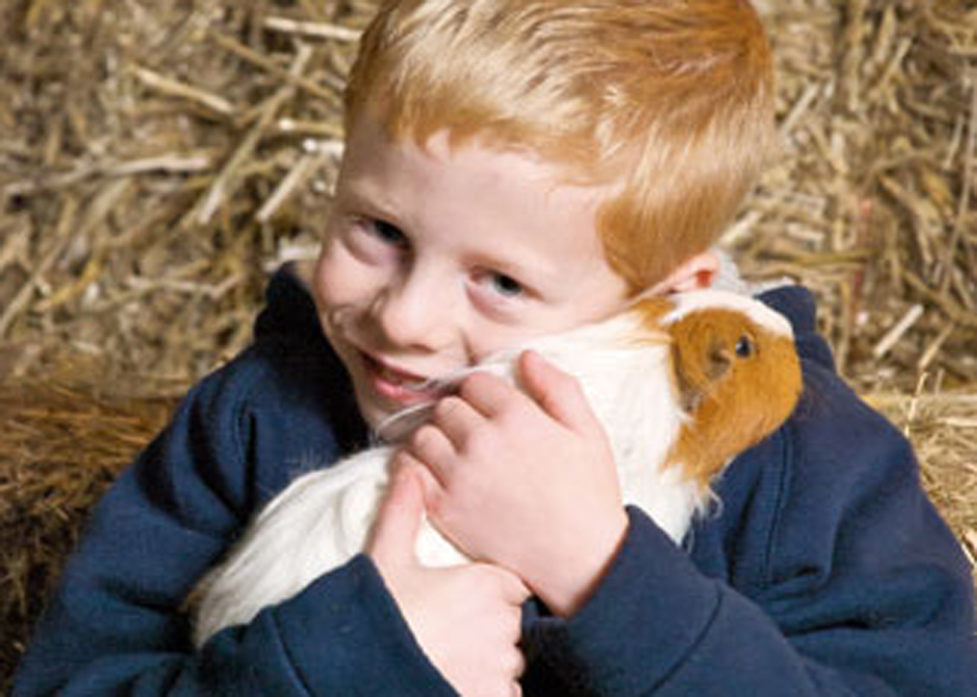 Rover Farm child with guinea pig