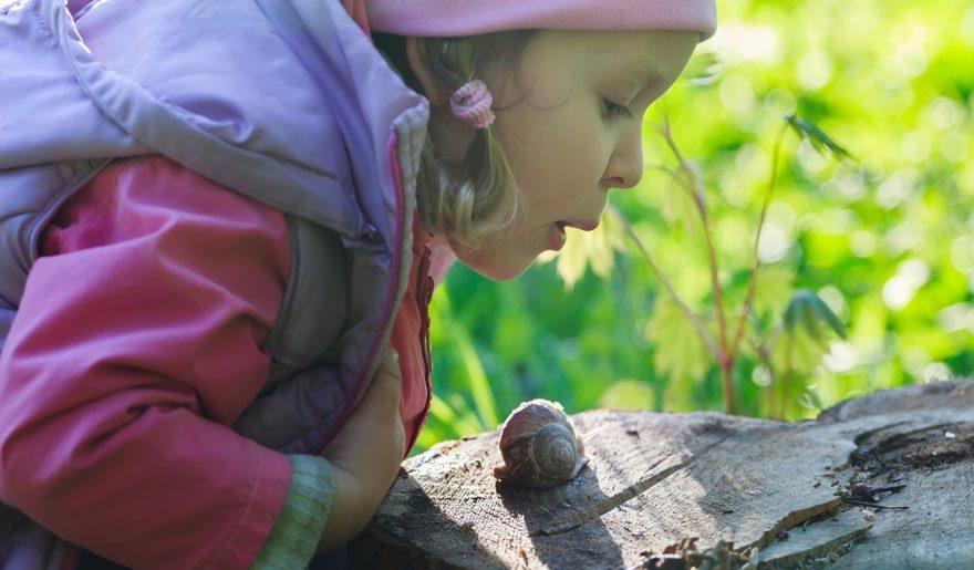Roves Farm and snail