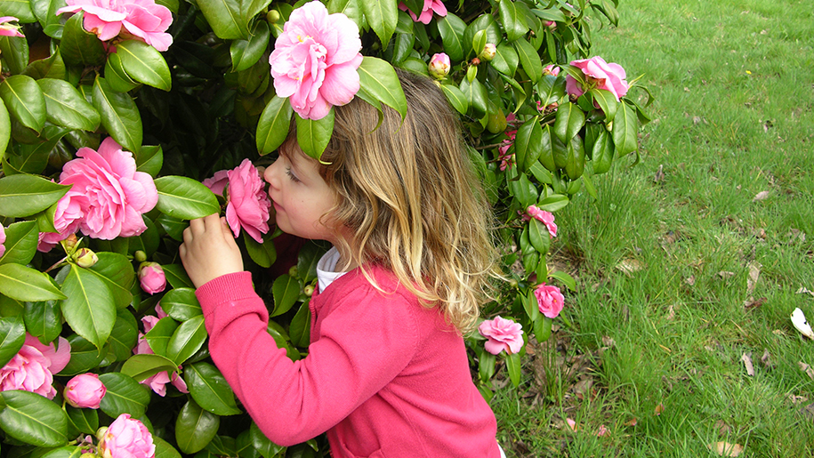 Sir Harold Hiller Gardens child smelling flowers