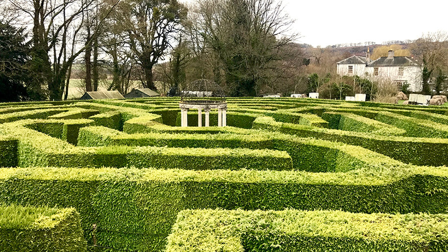 amazing hedge puzzle