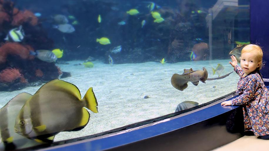 The Deep fish