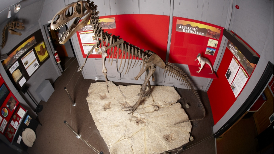 dinosaur skeleton exhibit