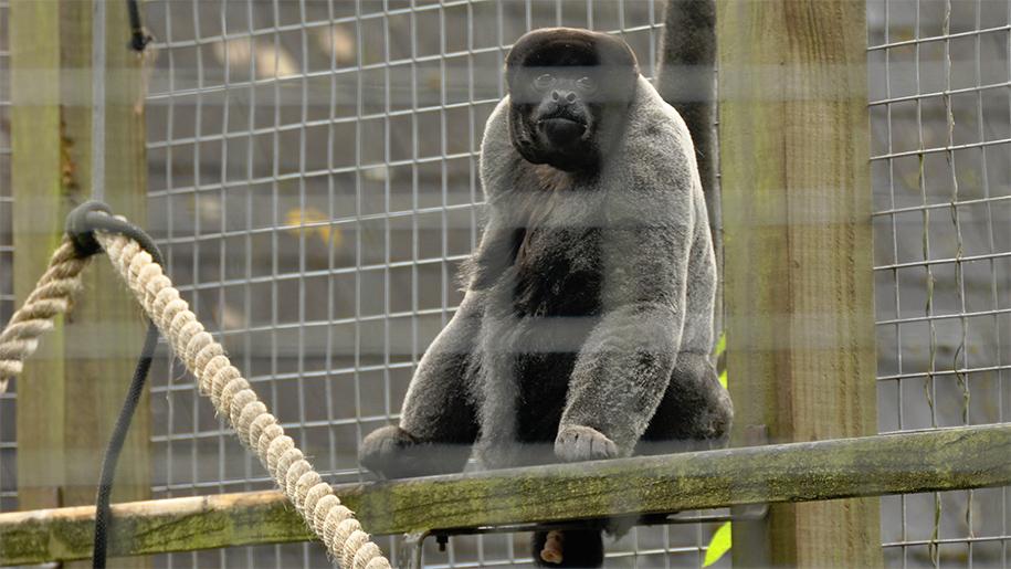 monkey sitting on a beam