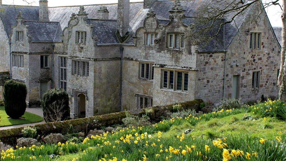 daffodils leading to manor house