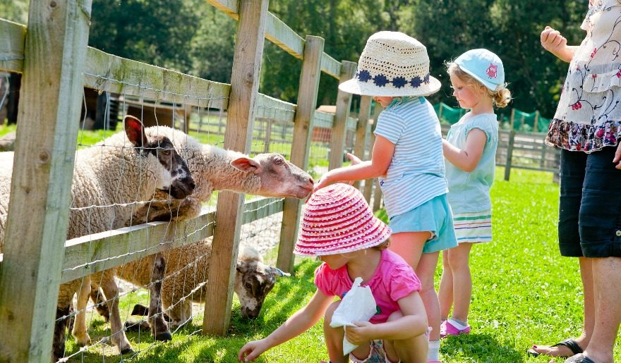Wellington County Park children feeding sheep