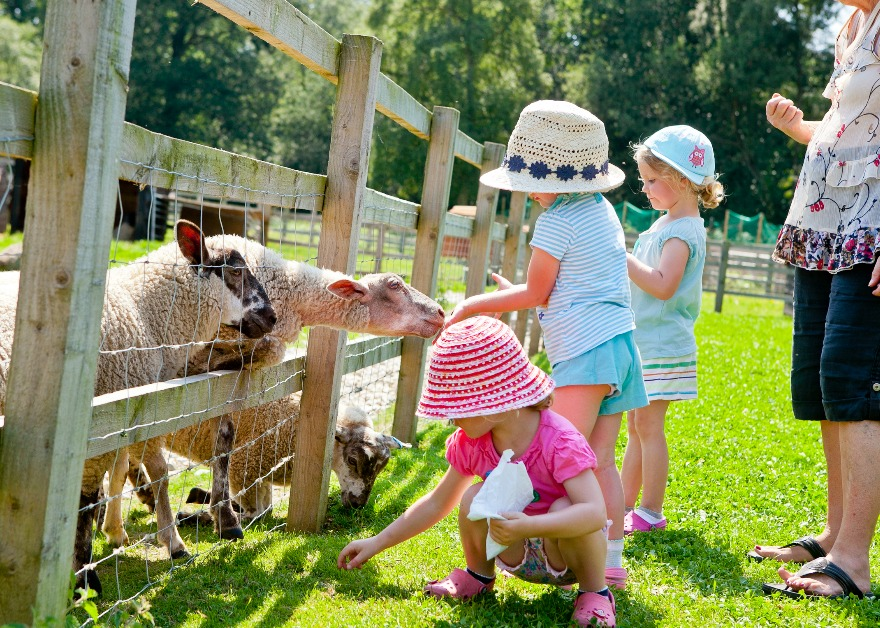 Wellington County Park children feeding sheep