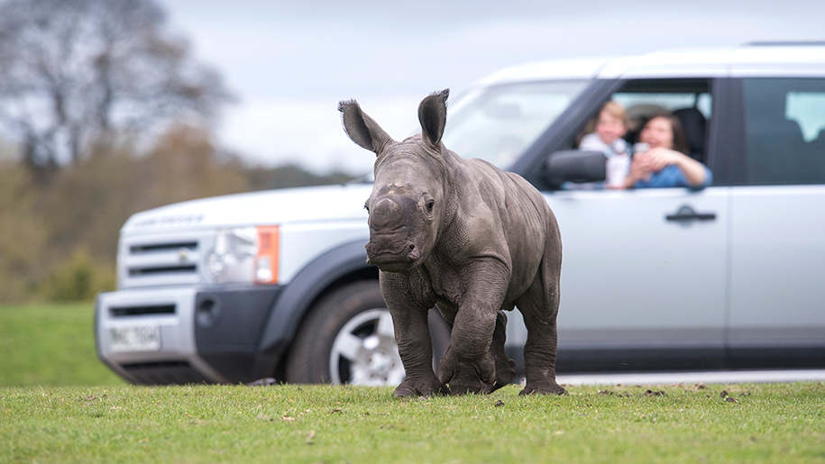 West Midland Safari Park baby rhino