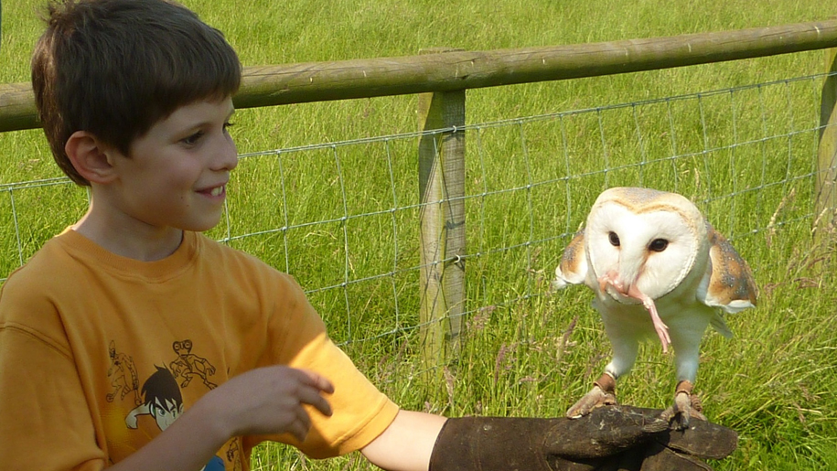 Whitehouse Farm Centre boy and owl