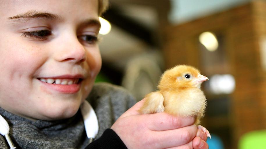 Whitehouse Farm Centre boy andchick