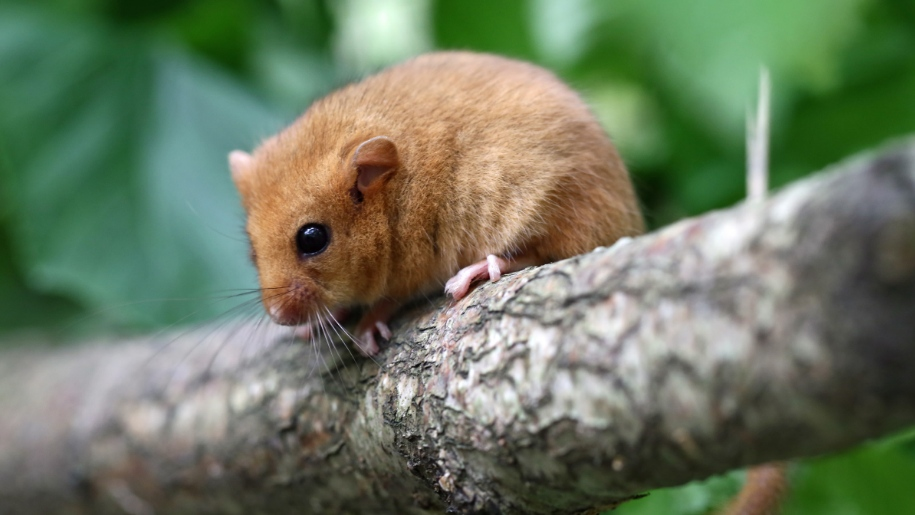 mouse on tree