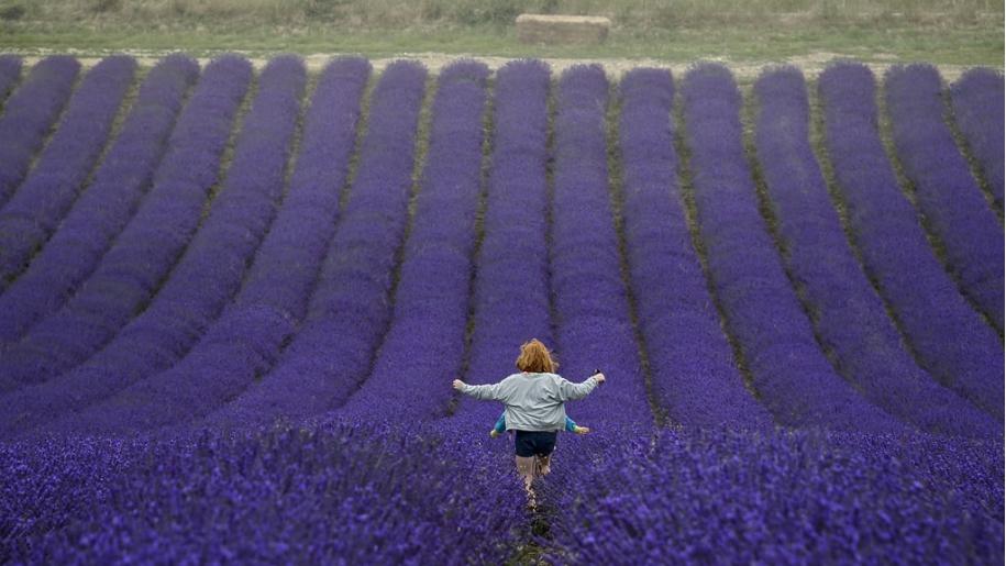 kids in lavender field