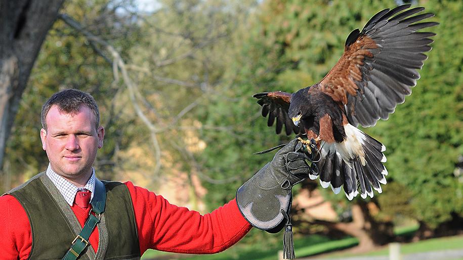 Leeds Castle man with hawk