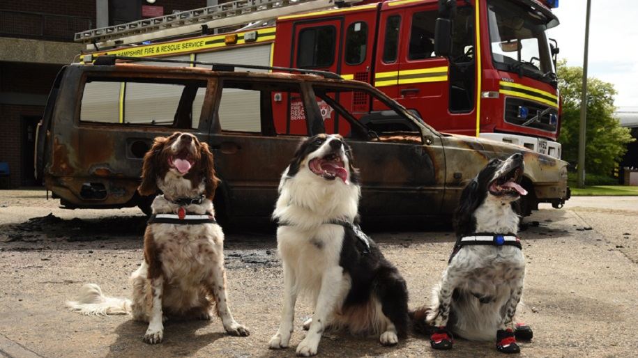police dogs and fire engine