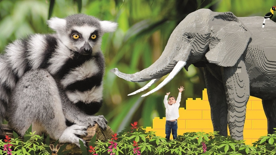 lemur and LEGO elephant