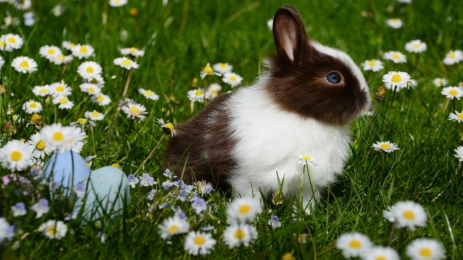 black and white bunny in field
