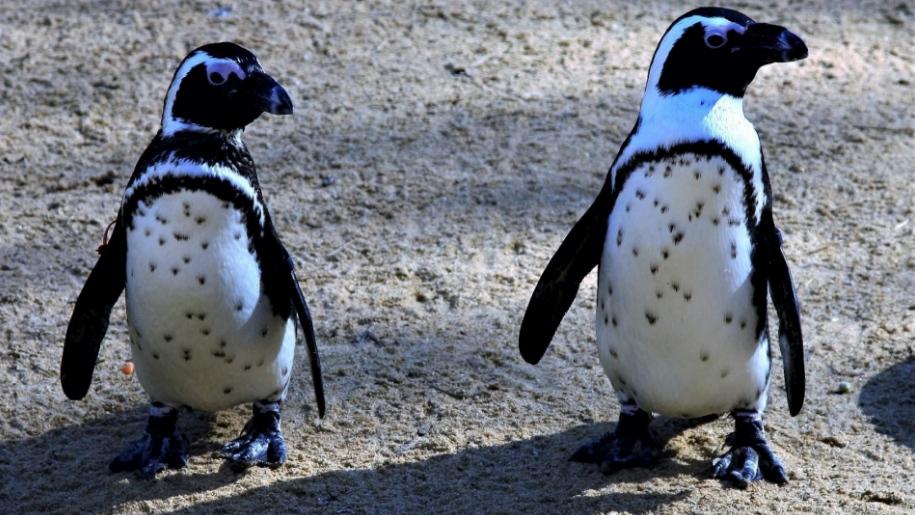 Birdworld penguins