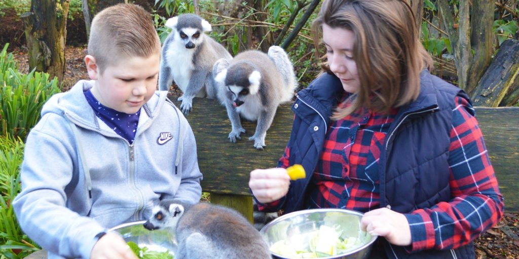 boy and girl feeding lemurs