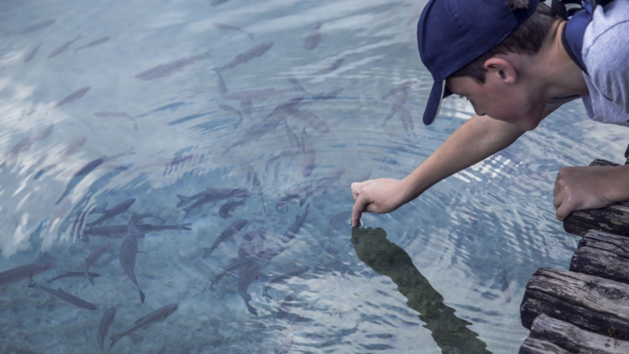 boy feeding fish