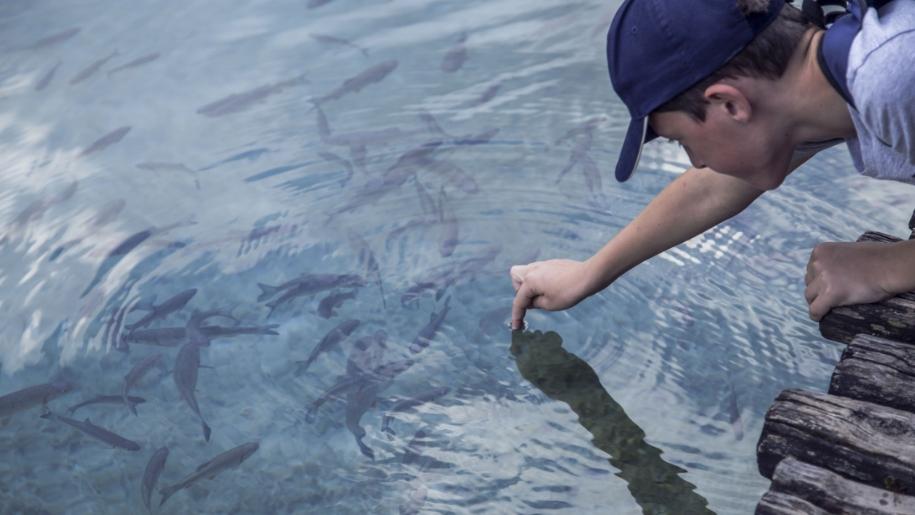 boy feeding fish