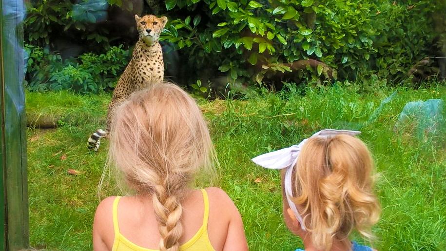 two girls looking at cheetah