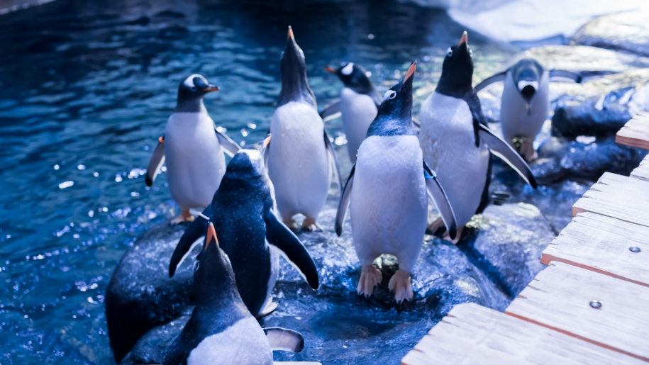 group of penguins indoors at The Deep