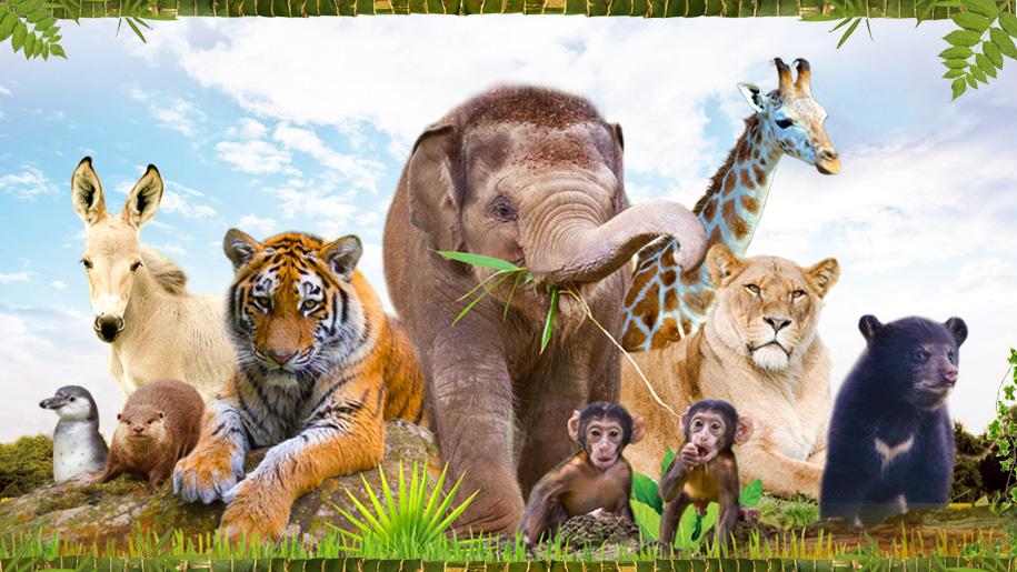 Woburn animal poster