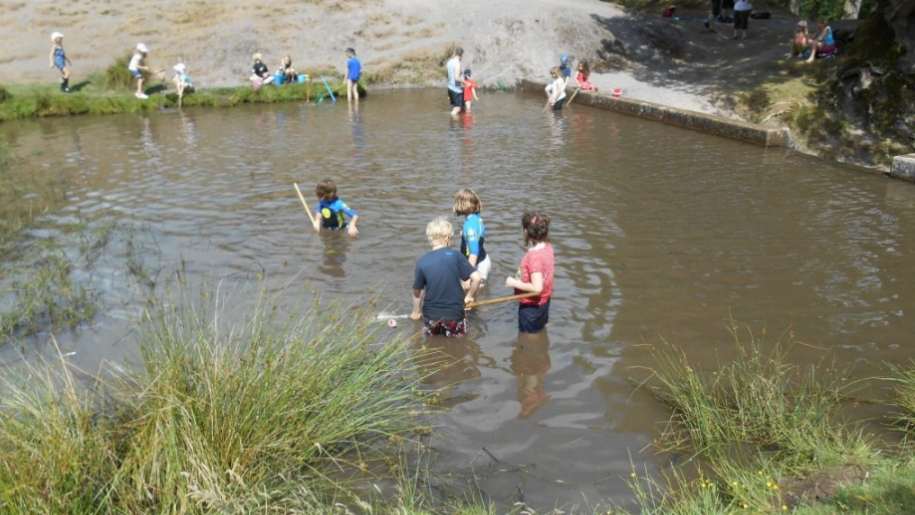 Carding Mill Valley pond dipping