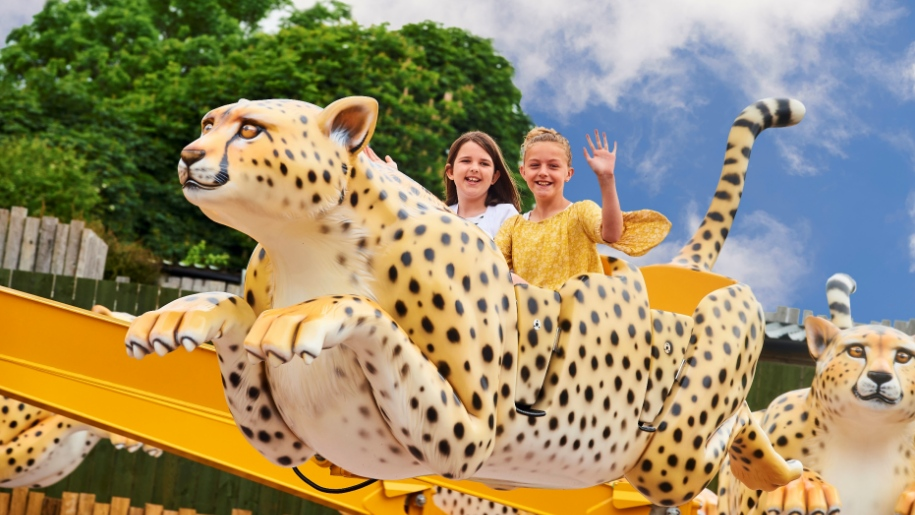 drusillas cheetah ride