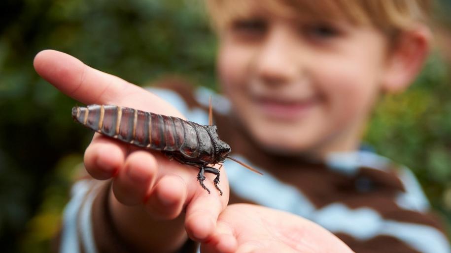 Boy holding cockroach