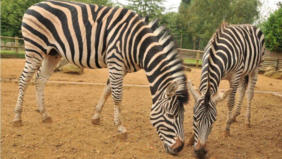 paradise wildlife park ungulate paddocks weekend