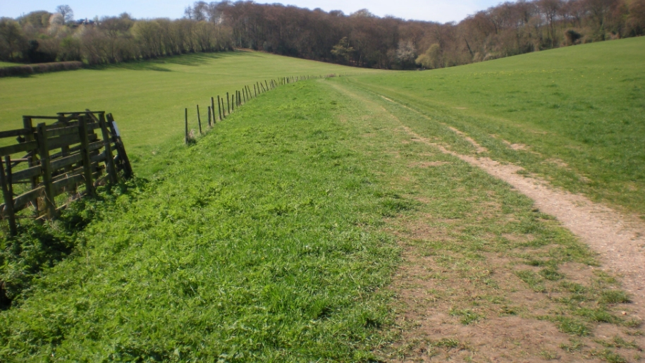 field in Angling Spring Wood