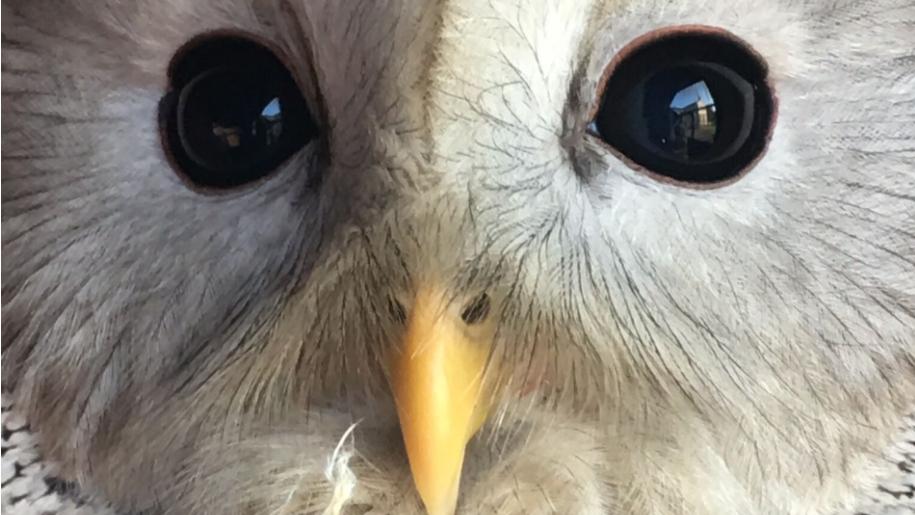 Hatfield Park Farm white bird of prey