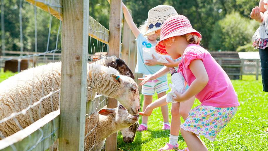children feeding sheep