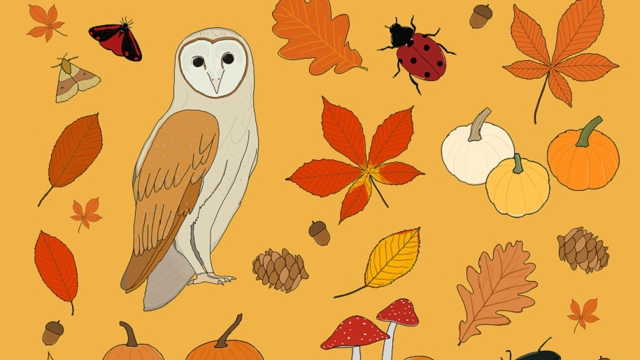 graphic of owl and autumn leaves at Holkham