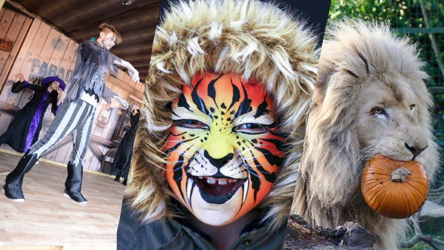 halloween at Paradise Wildlife Park