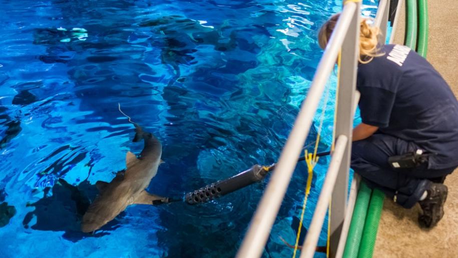 sharks at the deep
