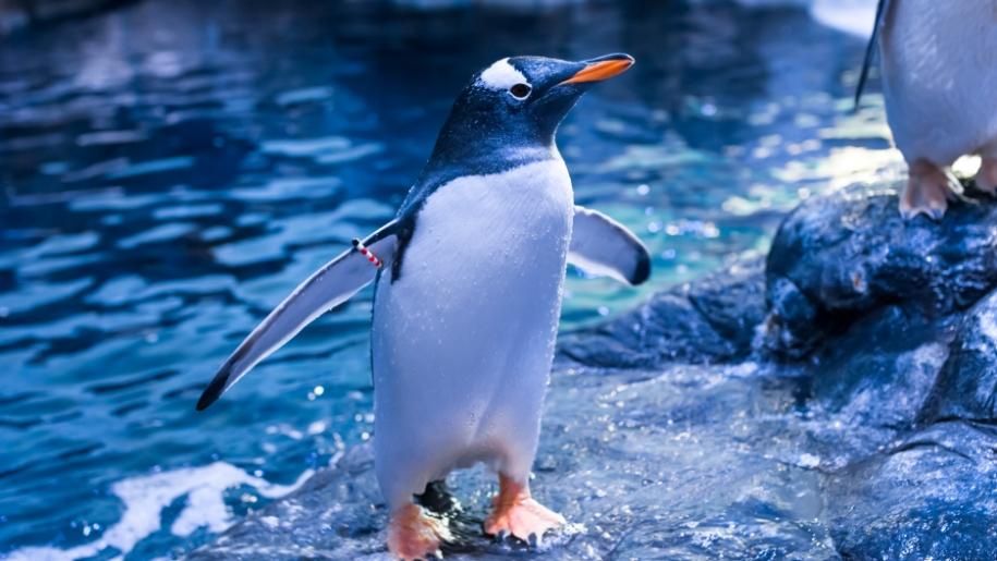 the deep penguin