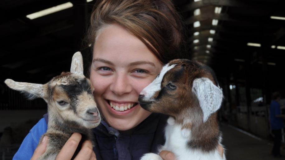 Stockley Farm Park goats