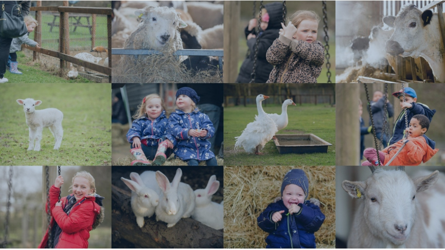 Thrift Farm collage