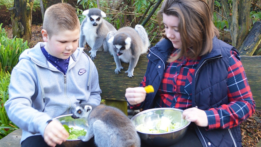 children feeding lemurs