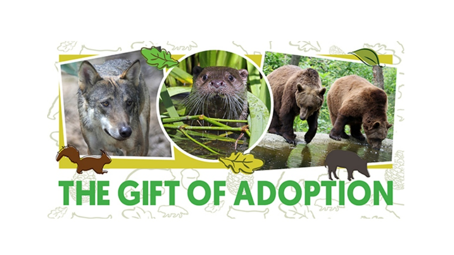 wildwood trust adoption