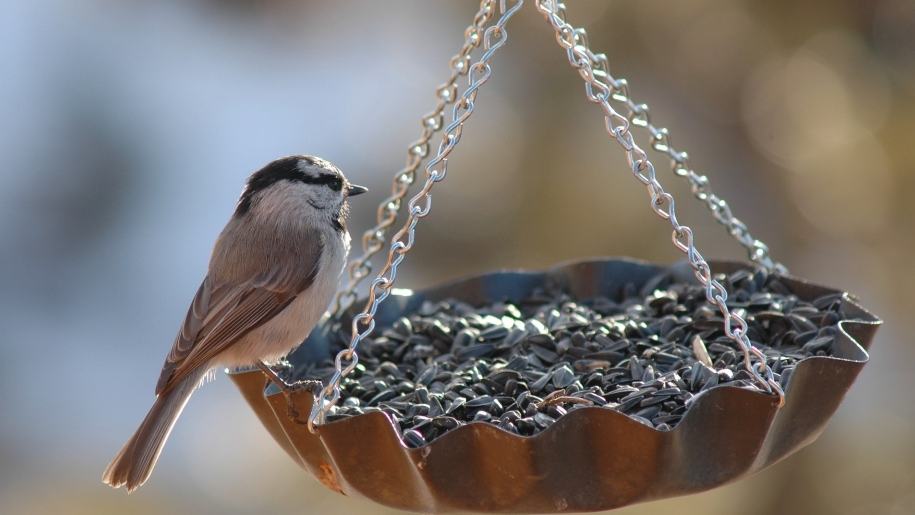 bird on feeder