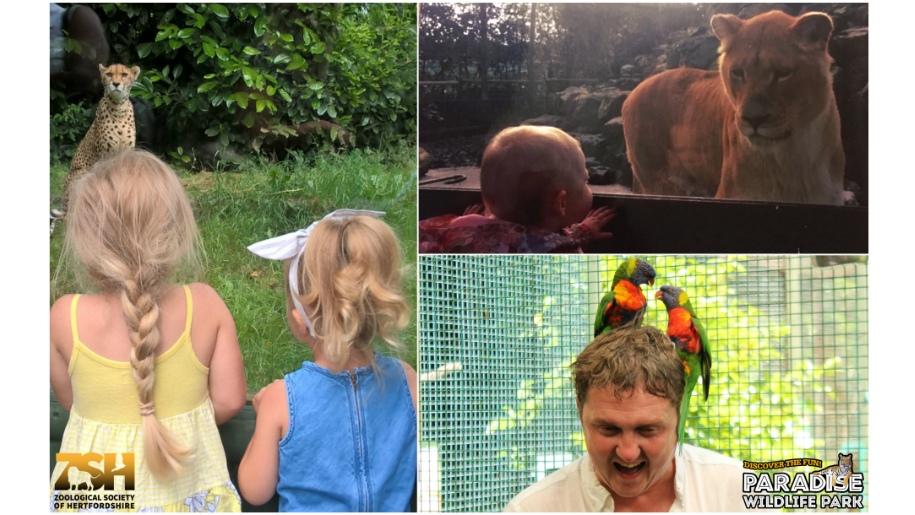 fathers day paradise wildlife