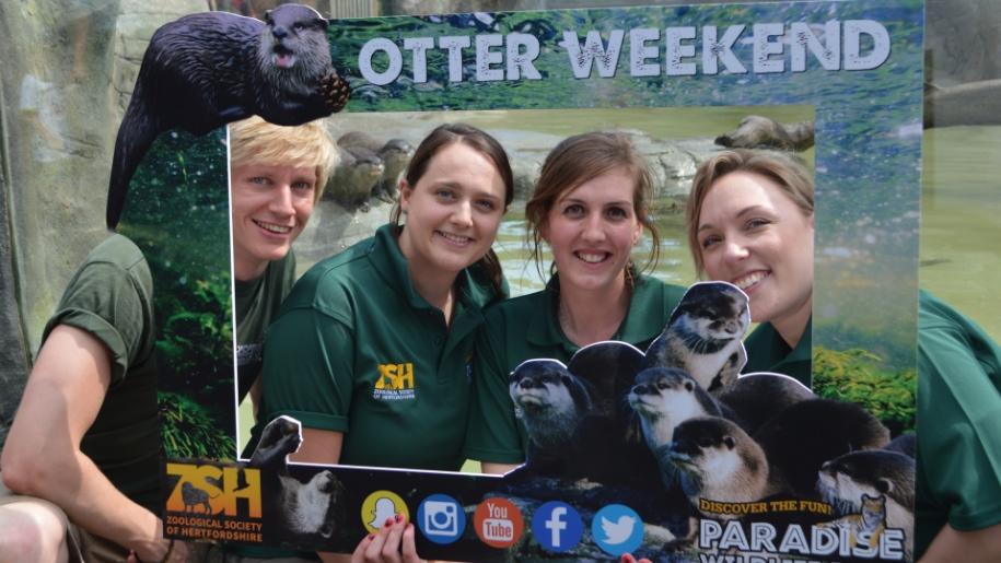 otter paradise wildlife