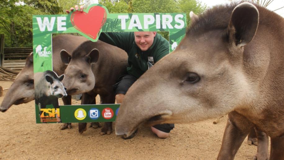 tapir paradise wildlife