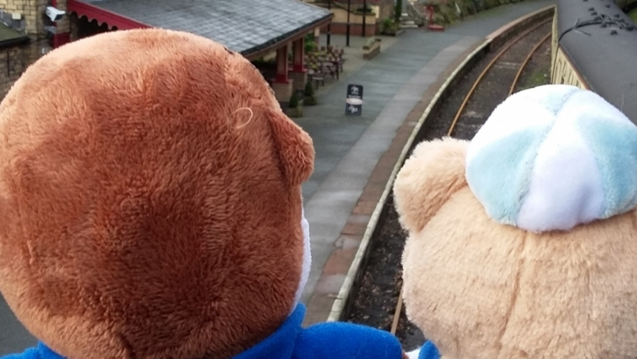 bears looking at train
