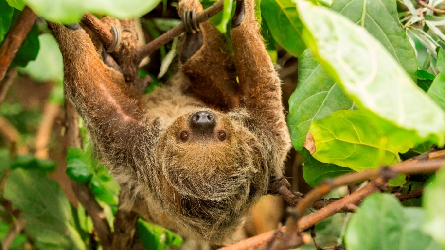 sloth in the trees